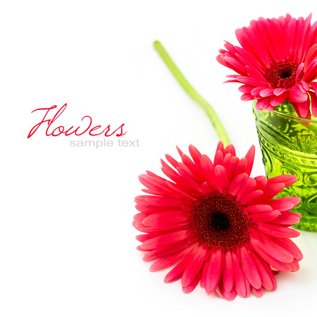 gebera: Pink gebera daisy flower over white background Stock Photo