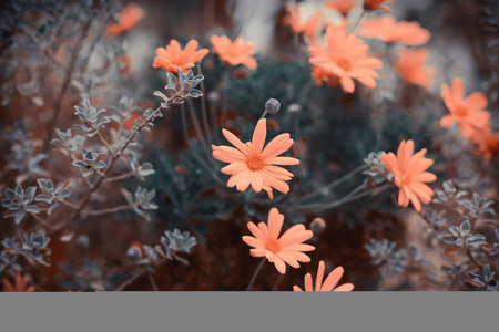 Summer vintage background with flowers