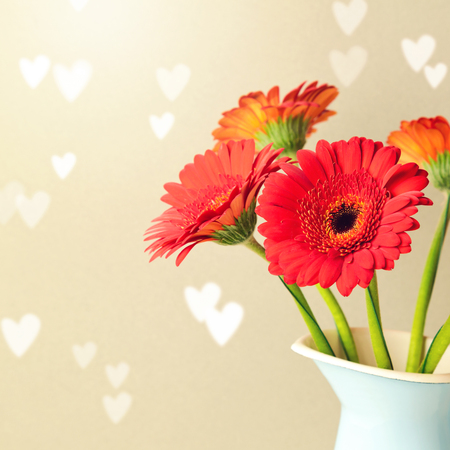 valentines day mother s: Gerbera daisy flowers background