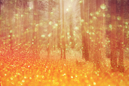 magical forest: Magical dreamy bokeh background