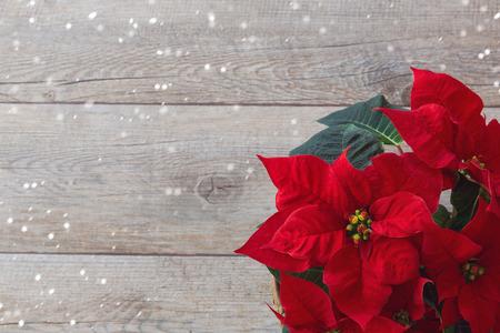 flor de pascua: Poinsettia de la flor de la Navidad sobre fondo de madera