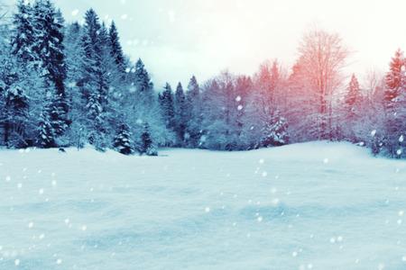 neige noel: hiver Noël backgrpund avec de la neige et de pins Banque d'images