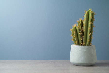 Cactus plant over gray background. Modern table mock up for design