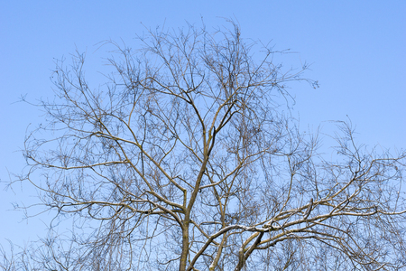 Treetops in front of a clear sky in winter