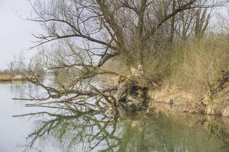 Untouched Nature