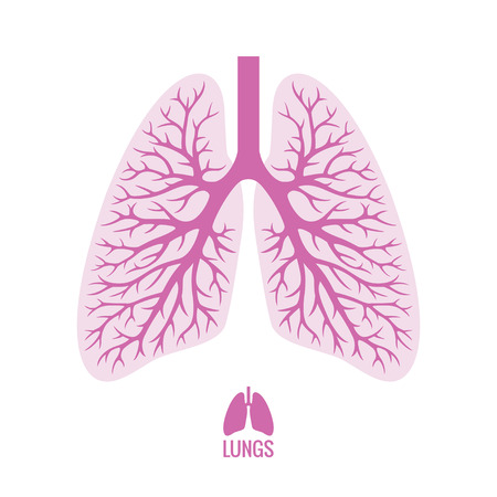 Human Lungs with Bronchial Tree