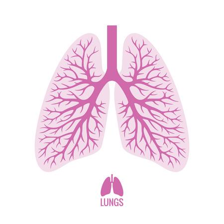Los pulmones humanos con árbol bronquial Foto de archivo - 38068959