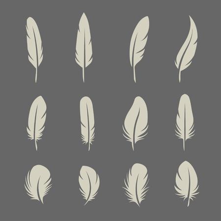 literatura: Plumas establecidos en el fondo oscuro