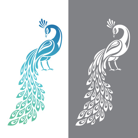 Vector illustration of peacock in color and monochrome variations
