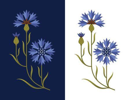 Stylized cornflower illustration