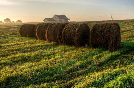 Haystacks on the field in early morning. Straw bales drying on a green grass and farm house during the sunrise in summer season, Poland. photo