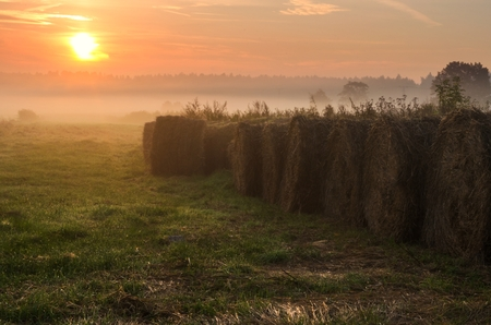 Haystacks on the field in early morning. Straw bales drying on a green grass in summer season during the sunrise, Poland. photo