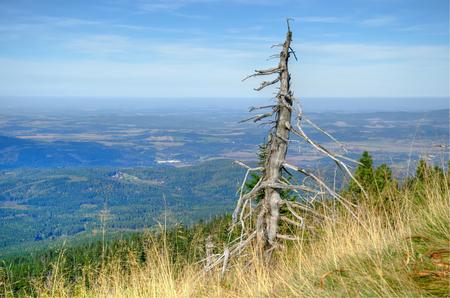kwaśne deszcze: Uschnięte drzewo. Ekologicznie uszkodzone drzewo w Karkonoszach, lasy Sudety zostały zniszczone przez zanieczyszczeń kwaśnych deszczy.
