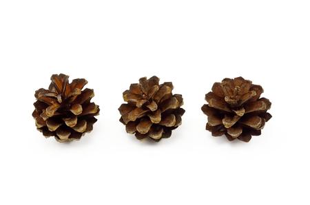 pine three: Decorative cones. Three pine cone isolated on white background. Stock Photo