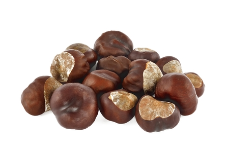horse chestnuts: Set of conkers. Bunch of horse chestnuts isolated on white background. Stock Photo
