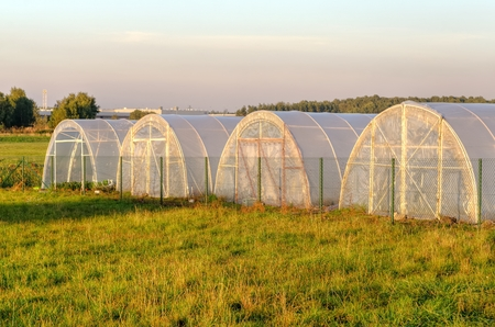 polythene: A group of greenhouses. Polythene tunnel as a plastic greenhouse on the meadow.