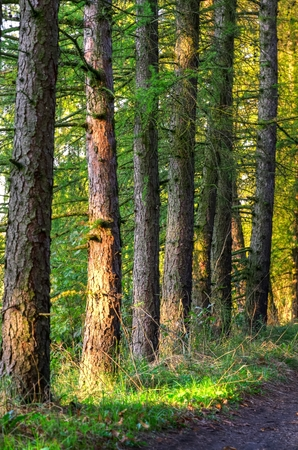road shoulder: Forest autumn landscape . Trunks of trees and forest path.