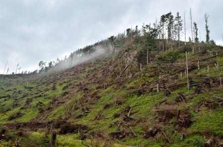 broken hill: Misty mountain landscape . Broken by the wind tree on a hill in High Tatra, Poland.
