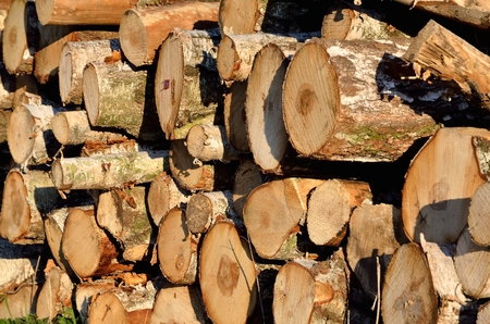 stacked up: Tree trunk in forest. Dry chopped wood logs stacked up on top of each other in a pile.