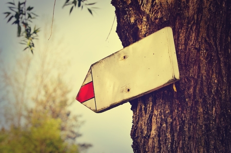 indicative: Wooden tourist sign on a tree pointing the way with space for your text in vintage style.