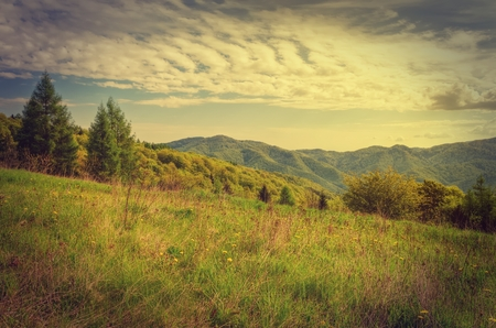 forested: Spring mountain landscape in vintage style. Green meadow and forested hills.
