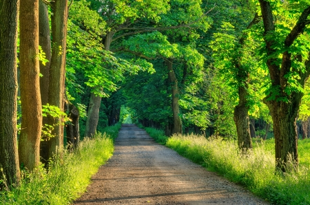 Spring forest landscape. Gravel road in the woods among the green trees.