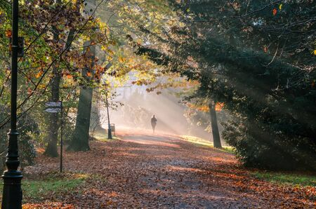 Morning autumn urban landscape. Person walking around the city park beautifully lit by the morning sun.