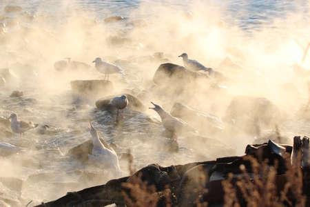 fracas: seagull Stock Photo