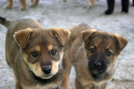 a pair of puppies look at the camera