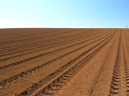 furrows: Ploughed Field