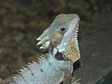 cold blooded: Lizard head