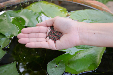nourish: Human hand is feeding the fish