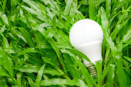 led lighting: LED bulb with lighting on the green grass