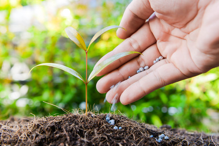 Human hand is putting the fertilizer to the growing plant Stock Photo