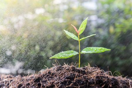 Wachsende Pflanze auf dem Boden im Regen als Bewässerung