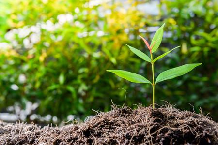 Growing plant on the soil with sunshine Lizenzfreie Bilder