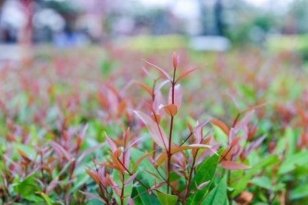 Die jungen Triebe der Pflanze Lizenzfreie Bilder