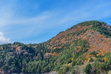 Leaves change the color on the mountain under the beautiful sky Lizenzfreie Bilder