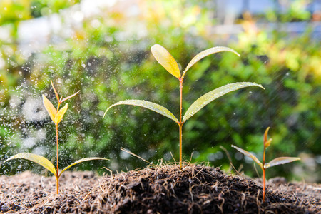 Three growing plant on the soil with raining Lizenzfreie Bilder
