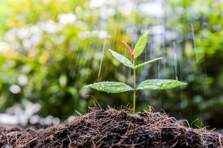 Growing plant on the soil in the rain as a watering Lizenzfreie Bilder