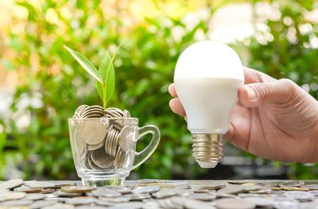 Frauenhand hält LED-Birne mit wachsender Anlage im Glas - Konzept der Einsparung von Energie