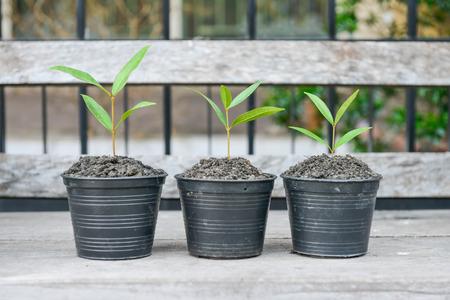 Growing plants in the flower pots Lizenzfreie Bilder