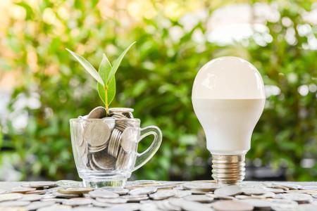 LED-Lampe mit wachsender Pflanze im Glas und Sonnenlicht - Konzept der Energieeinsparung