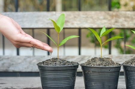 germinación: Watering to growing plants in the flower pots
