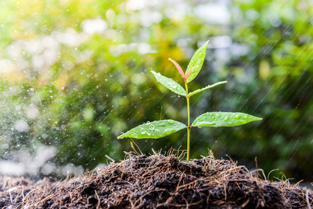 Growing plant on the soil in the rain as a watering Stock Photo