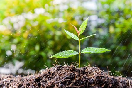 seeding: Growing plant on the soil in the rain as a watering Stock Photo