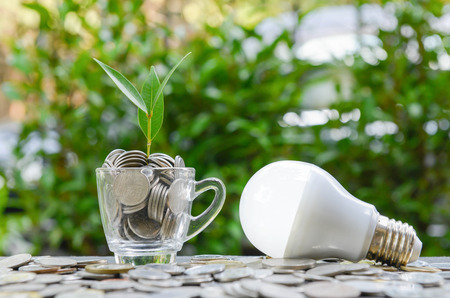 sun energy: LED bulb with growing plant in the glass and sun light - Concept of saving energy