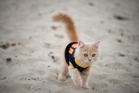 Cute cat with shirt walking on the sand Standard-Bild - 106658946