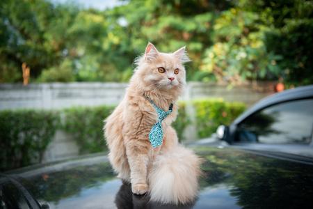 Cute cat with tie on the car loop Standard-Bild - 118979962