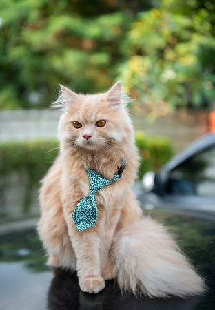 Cute cat with tie on the car loop Standard-Bild - 118979963